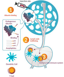Amphiphile delivery into immune system